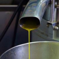 Olio Extravergine al frantoio