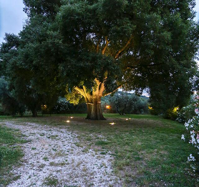bagolaro-albero